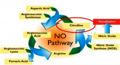 L-Citrulline vs Citrulline Malate Whats The Difference ?
