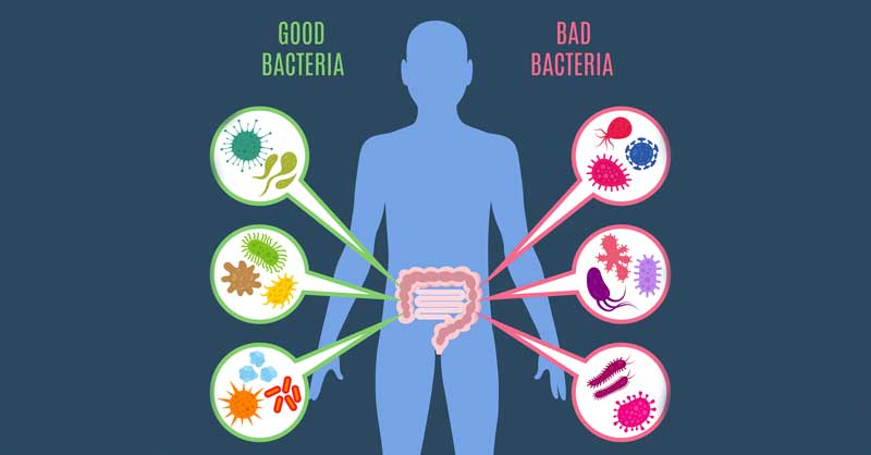 Probiotic With Lactobacillus Gasseri - All about Lactobacillus gasseri