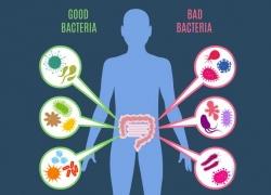 Probiotic With Lactobacillus Gasseri